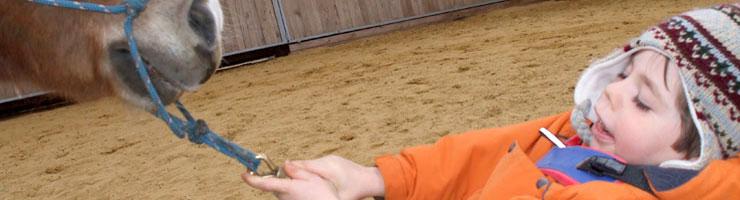 Ergotherapie - Tiergestützte Therapie